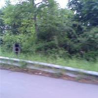 Da ist wieder unsere kleine kakerlake 100m nach der Haltestelle Neckarspitze.