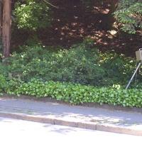 hier der Wabenfilterblitz & die FE 3.0 . Den Blitz konnte man gut sehen-die Kamera jedoch war gut unten im Gestrüpp versteckt mit ihrem Wetterschutz