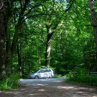 """Da steht der """"Blizer-Zafira"""" mitten im Wald..."""