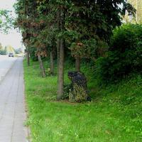 """Das """"Blitzergeschwür"""" der Mecklenburger am Baumstamm in Rtg. Rhena / Gadebusch..."""