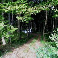 Warum wird der alte T4 im Wald versteckt? Haben die jenigen ,die dort drin hausen ein schlechtes Gewissen? Grauer T4 NWM-T 457 !