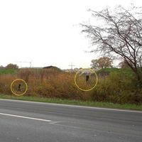 Diese Aufnahmen waren nur von der gegenüberliegenden Strassenseite möglich. Beim Vorbeifahren war nichts zu sehen !!!