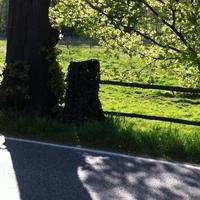 und hier am Baum mit einem Tarnnetz gut getarnt steht der Fotoapparat.