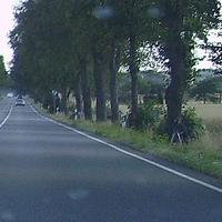 Vor dem Baum sitzend, den gruenen Hut tief in das Gesicht gezogen lagert er am Wegesrand.  Hier darf man wirklich von Wegelagerei sprechen :-)