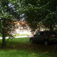 Der bekannte Tiguan ist heute gut versteckt unter einem Baum.
