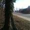 Hier mal eine schöne Aufnahme in Richtung Grünhufer Bogen fahrend. Ich muss sagen sehr gut Abgetarnt und gut abgestimmt mit dem Efeu der am Baum wächst.