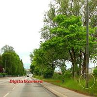 """Am ehemaligen Reklameschild-Platz steht das """"Blitzgeschirr"""" gut getarnt im Grünen... Der ES 3.0 Sensor steht im Busch versteckt. Schlecht einsehbar..."""