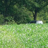 am 3.7.12 blitzte die Polizei mal wieder mit dem bekannten Bulli (H AH 348), diesmal die in Rtg. Sehnde fahrenden Autos! Allerdings konnte man den Bus schon bei aufmerksamer Beobachtung in den Feldern sehen, auch die Kameras waren sichtbar!