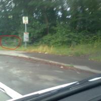 Auto steht im Wald, von der Straße aus nicht sichtbar.