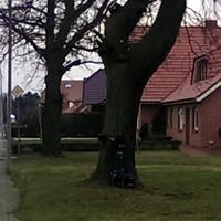 Multanova VR 6F am Baum, Caddy auf dem leeren Grundstück neben der Hecke