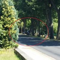 VW Caddy, durch die Bäume erst spät zu erkennen.