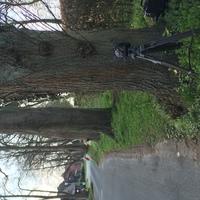 Messgerät und Blitzer stehen neben der Straße zwischen den Bäumen. Auto (blauer Ford) steht hinter einer Hecke.