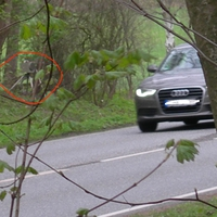 60 km/h, grüner Mercedesbus steht hinten im Gebüsch