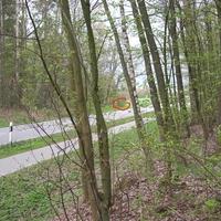 Richtung Großhansdorf im Gebüsch am Waldanfang