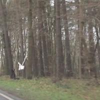 Leivtec XV3 mit neuem schwarzen Regenüberzieher steht vor einem Baum, der Blitz einige Meter vorher direkt hinter einem Baum. Einzige Chance war die nass glänzende Oberfläche des Koffers auf dem Boden neben der Kamera.