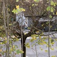 Beidseitige Messung im Stockweg auf Höhe der Schule.