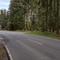 im Wald versteckt, Anfang eines Waldweges. Mercedes Van mit RV-Nummer weiter hinten
