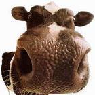 Cowface2mk